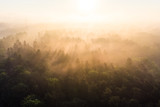 Morgennebel in den Baumkronen, Luftaufnahme, Teutoburgerwald, Deutschland - 224190304