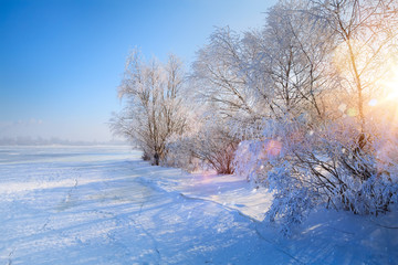winter Landscape with Frozen lake and snowy trees