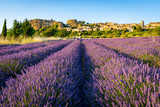 Lavender Field with medieval hill-top town Saignon in the background, Provence, France