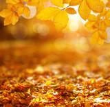 Autumn leaves on the sun © Alekss