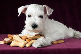 puppy with dog biscuits bones - 224250968