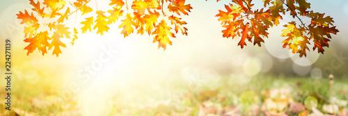 Kolorowy jesień zmierzchu tło