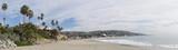 Palm trees at Laguna Beach - 224274571