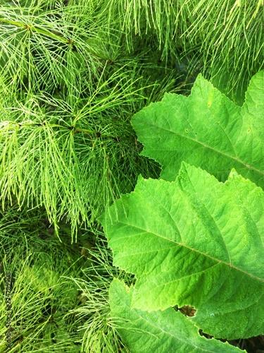 Green forest grass texture - 224289908
