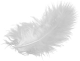 White Feather, Isolated - 224292543