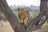 Mama Simba is watching - 224300374