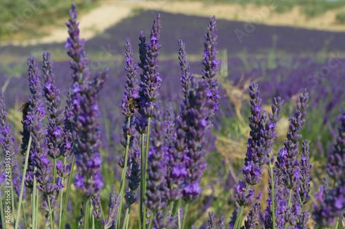 K chenr ckwand aus glas mit foto heute 20 rabatt lavendel - Kuchenruckwand lavendel ...