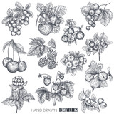 Vector collection of hand drawn sketched berries isolated on white background. - 224332318