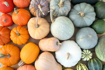 Colorful varieties of pumpkins and squashe