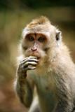 Portrait of the monkey - 224348727