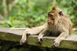 Portrait of the monkey - 224348755