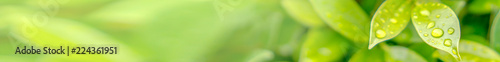 Leinwandbild Motiv Natural Leaf Banners for Websites.
