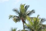 coconut beach - 224367791