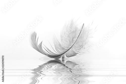 Leinwanddruck Bild Feder auf Wasser Abschied