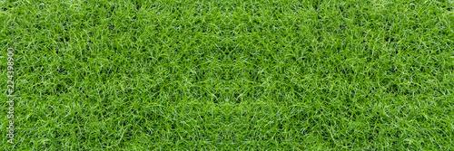 Fresh, juicy, bright green grass. Top view. - 224398900