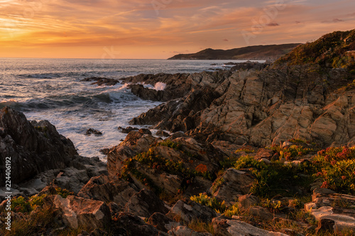 Sunset at Woolacombe, Devon, warm evening light on succulent coastal plants, with waves washing over slate rocks from the Devonian period