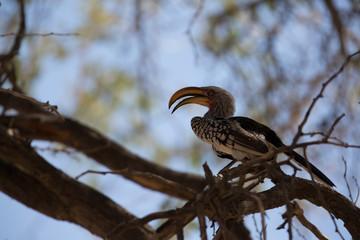 african bird looking for food