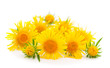 Bouquet of yellow  wildflowers.