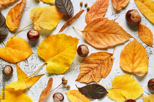Autumn leaves on a stone background. Full frame of seasonal natural pattern viewed from above. Top view © virtustudio