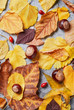 Autumn leaves on a stone background. Full frame of seasonal natural pattern viewed from above. Top view