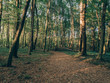 forest in autumn - 224574324