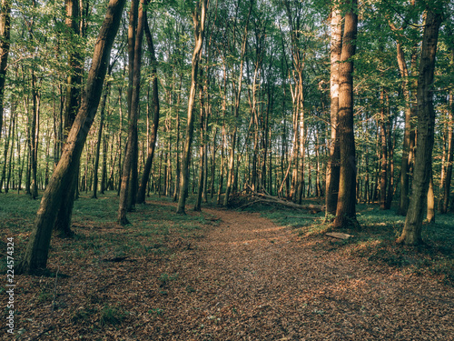 Sticker forest in autumn
