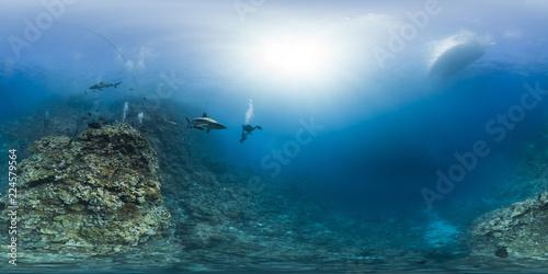 Fototapeta Sharks with diver in Australia