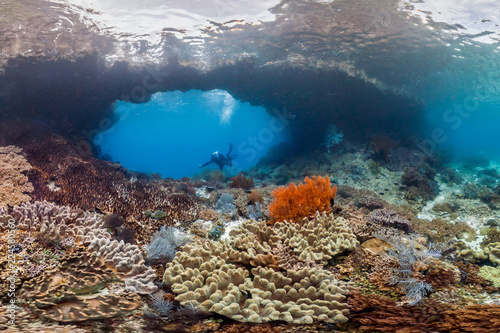 Coral reef in Raja Ampat