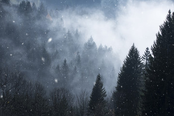 Dreamy snowfall in foggy and cloudy forest. Beautiful winter snowy woodland.  © robsonphoto