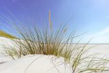Nordfriesische Inseln, Blick durch einen Grasbüschel auf einer Sanddüne zum Strand - 224602567