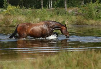 Pferd am See © Nadine Haase