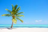Palm tree on tropical paradise beach - 224679106