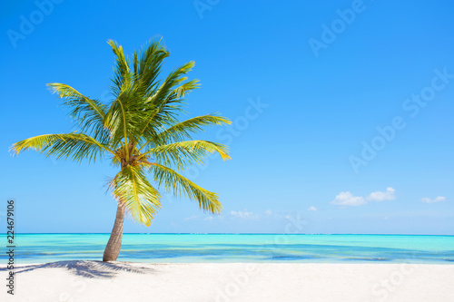 Palm tree on tropical paradise beach