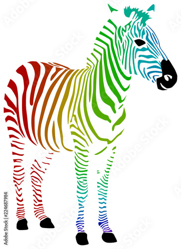 Regenbogen Zebra - 224687984