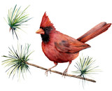 Watercolor bird cardinal. Hand painted greeting card illustration with red bird and branch isolated on white background. For design, print or background. - 224759113