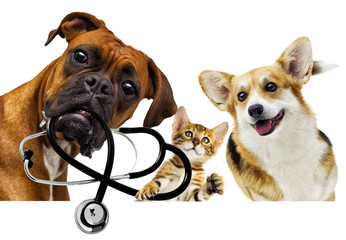 veterinarian dog and cat © Happy monkey