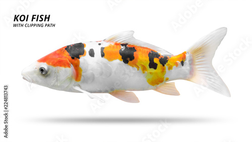 Koi fish isolated on white background. Colorfuls carp fish. ( Clipping path ) © Lunatictm