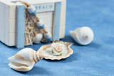box with seashells on a blue background - 224861566