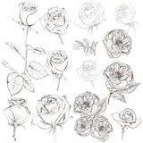 Collection of vector hand drawn roses for design - 224873355