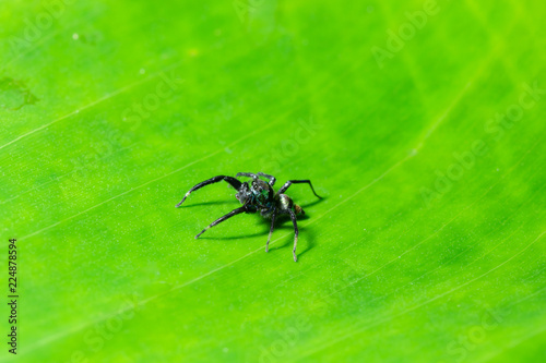 Leinwandbild Motiv Macro spider on the leaf