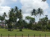 palme - 224903344