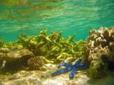Corals in the Great Barrier Reef, Australia - 224920915