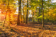 Leinwandbild Motiv Sonnendurchfluteter Wald im Herbst
