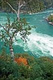 Niagara Whirlpool and Birch Tree