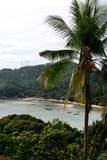 Sea view with the palm tree from viewpoint on island in Thailand - 224949981