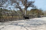 samotna koza idąca pustą drogą