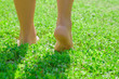 Leinwanddruck Bild - Young woman's barefoot walking on the fresh, green grass in sunny summer in the morning. Restful moment. Healthy lifestyle. Bright color. Close up. Back view. Go away.