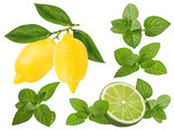 Fresh lemon,mint leaf and lime  isolated on white background