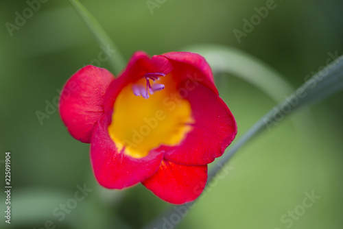 Red flower on a green background