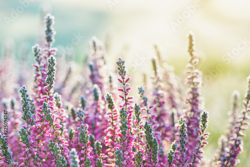 Leinwandbild Motiv Heather frozen flowers. Bright natural cyan and yellow background
